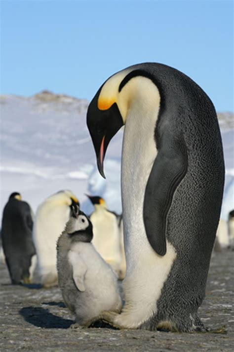 penguins eat    types  penguins eat