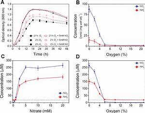 Nitrate And Oxygen Effect On E Coli Bacterial Cultures
