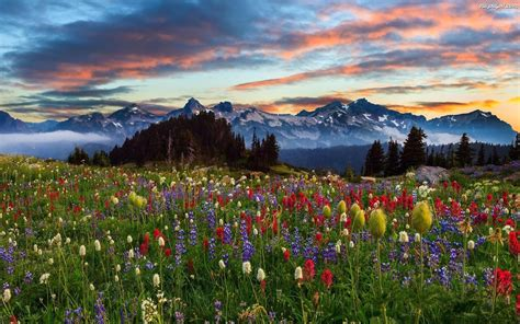 meadow  mountain herbs   colors pine trees