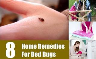 8 home remedies for bed bugs treatments cure for bed bugs search home remedy