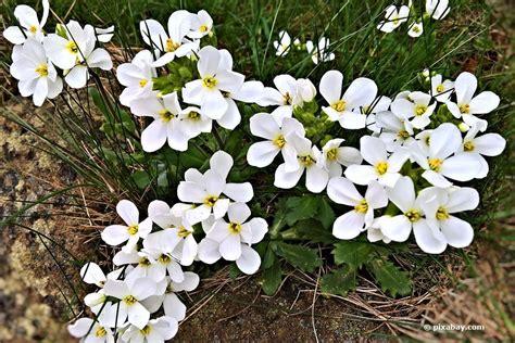 Mit Schneeflockenblume Ein Prachtvolles Bluetenmeer Auf Dem Balkon Schaffen by Balkonpflanzen F 252 R Schattige Standorte Diese 18 Pflanzen