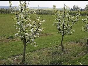 Comment Tailler Un Pommier : les diff rentes formes d 39 arbres fruitiers youtube ~ Dode.kayakingforconservation.com Idées de Décoration