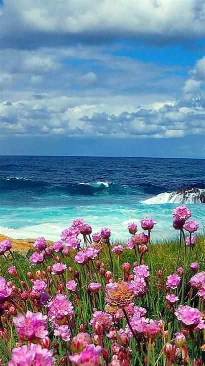 Flowers Beach Sea Ocean Wallpapers Nature Scenes