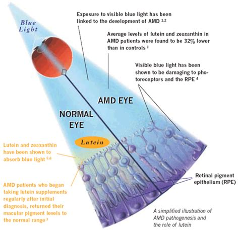 blue light macular degeneration sihatselalu lutein and zeaxanthin for the eyes