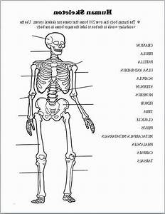 Printable Anatomy Worksheets Skeleton Diagram For Kids To