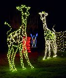 oakland zoo lights piedmont grocery