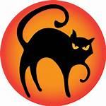 Icon Halloween Cat Icons Animal