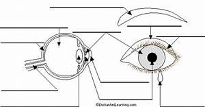 Label Eye Printout  2