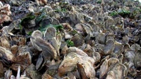 ประโยชน์ของการฟื้นฟูแอ่งน้ำและโขดหินหอย