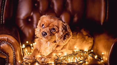dog photography hacks
