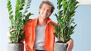 Pflege Von Zimmerpflanzen : zimmerpflanzen zamioculcas braucht wenig licht und pflege ~ Markanthonyermac.com Haus und Dekorationen