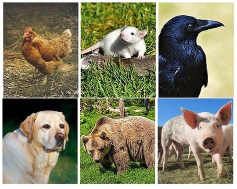 omnivores herbivores carnivores animals examples omnivorous eat human characteristics bear crow difference between raccoon vore omni diet eater