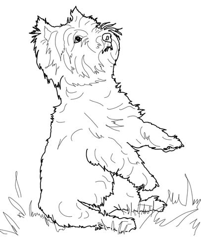 west highland white terrier coloring page  printable