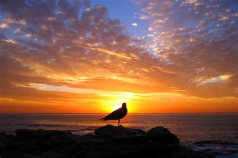 Il Gabbiano Pescara - bed and breakfast il gabbiano montesilvano spiaggia pescara