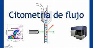 Citometr U00eda De Flujo