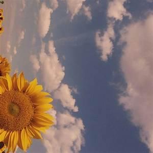 vintage sunflower | Tumblr
