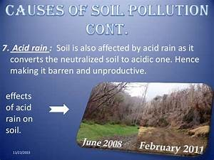 Gallery For > Acid Rain Effects On Soil