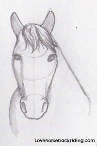 Draw A Horse Head - The Final Steps