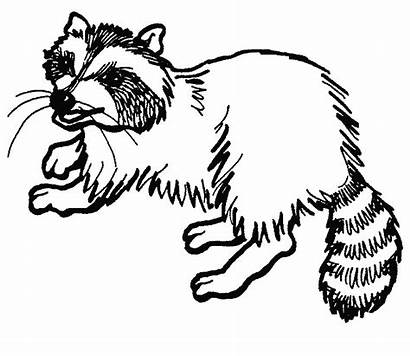 Raccoon Coloring Pages Printable Clipart Cartoon Dog
