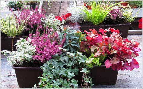 Pflanzen Für Den Balkon by Winterharte Pflanzen F 252 R Den Balkon S 252 Dseite Balkon