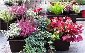 Winterharte Pflanzen Für Balkonkästen : winterharte pflanzen f r den balkon s dseite balkon hause dekoration bilder 67rarrbdr0 ~ Orissabook.com Haus und Dekorationen