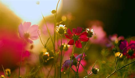 Sunrise Images With Flowers Beautiful Scenes Hd