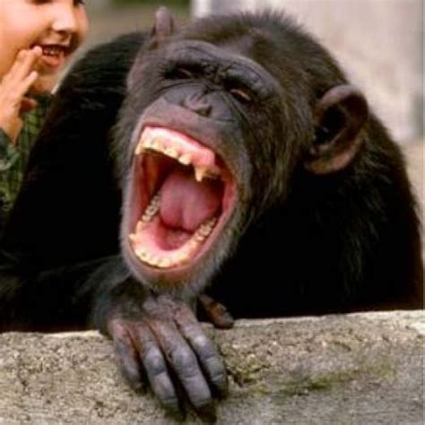 Animal Laughing Funny Face
