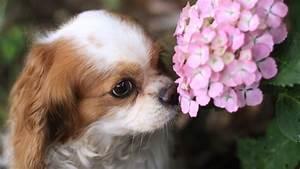 Schneckenkorn Giftig Für Hunde : giftige pflanzen f r hunde dies sollten sie wissen ~ Lizthompson.info Haus und Dekorationen