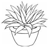 Coloring Pages Aloevera Flowers Previous Zone Learning sketch template