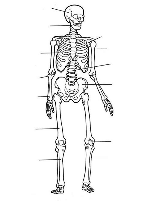 anatomy of a bone coloring anatomy of a bone coloring coloring pages