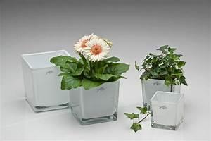 Action Online Shop Deko : glas und porzellan im online shop bei deko mich ~ Bigdaddyawards.com Haus und Dekorationen