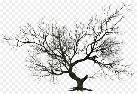 Tree Wallpaper Png by The Tree Clip Trees Cliparts