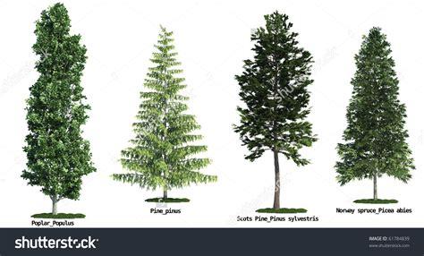 Unterschied Fichte Kiefer by Four Poplars Clipart Clipground