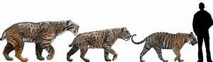 The saber-toothed tiger (Smilodon) | DinoAnimals.com