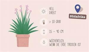 Welche Pflanzen Fürs Schlafzimmer : welche pflanze f r welches zimmer 7 geniale und hilfreiche ideen kochrezepte pflanzen ~ Frokenaadalensverden.com Haus und Dekorationen