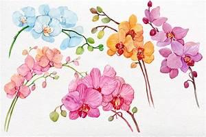 watercolor clipart/orchids /wreaths by Clipart Shop