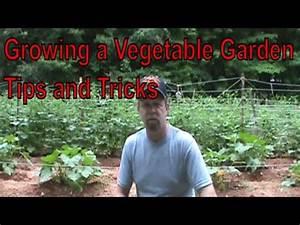 Growing a Vegetable Garden Update Tips & Tricks June 30 ...