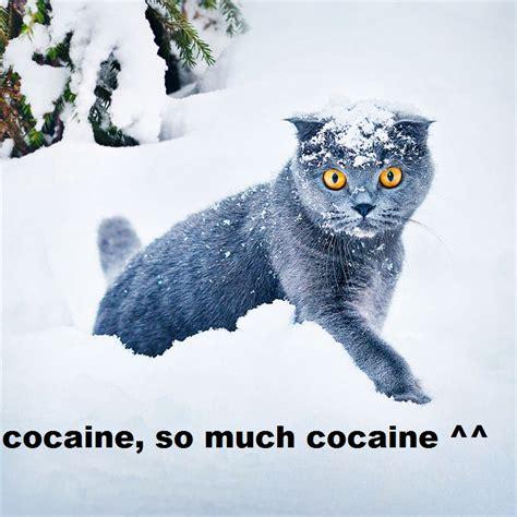 So Much Cocaine Meme - so much cocaine meme memes