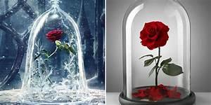 Beauty And The Beast Rose Glass Dome | www.pixshark.com ...