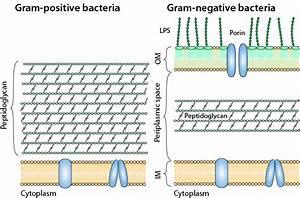 Bacteria  U2013 Understand  U2013 React
