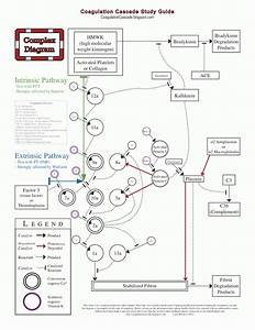 The Coagulation Cascade  Pdfs To Download