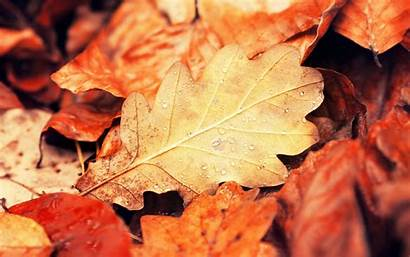 Leaves Autumn Fall Nature Wallpapers Close Orange