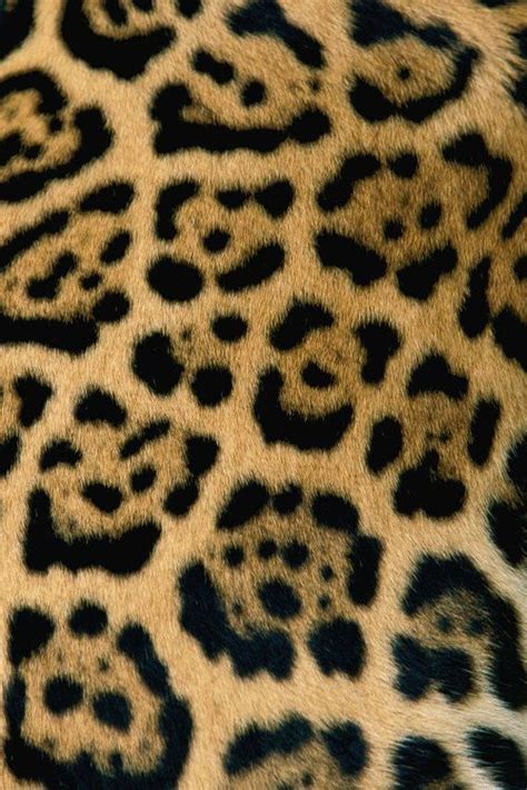Jaguar Print by Animals Are Beautiful Imitate Them But Don T Wear Them