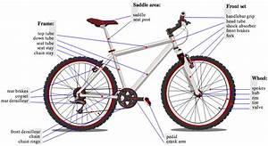 The Zombie Cyclist  Bicycle Anatomy