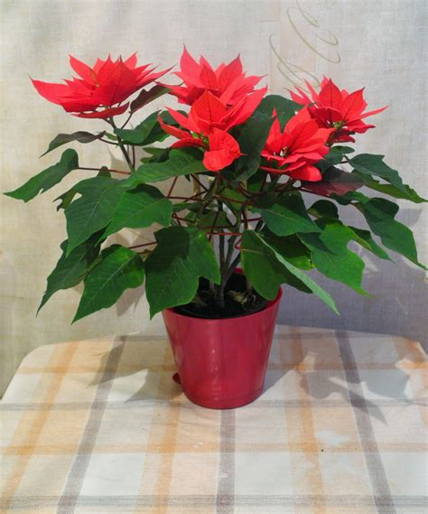 gambar menanam daun bunga berkembang merah bunga