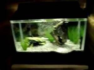 10 gallon fish tank neon tetras Neon Tetra 10 Gallon