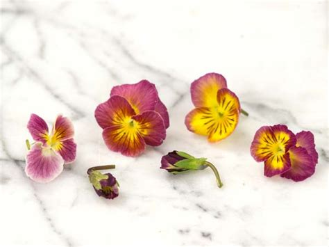 morning dew pansy baker creek heirloom seeds