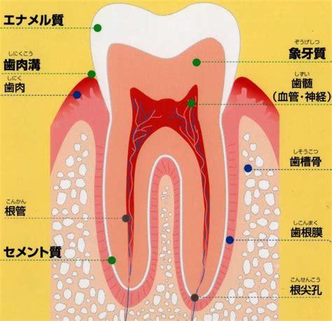 歯 画像  に対する画像結果