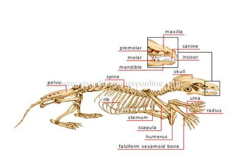 Simple Snake Head Anatomy