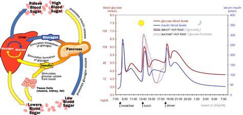 Homeostasis And Feedback « Kaiserscience